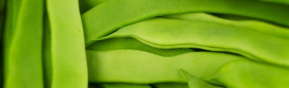 Jud as verdes - Tiempo coccion judias verdes ...